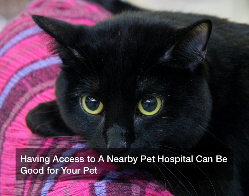 Having Access to A Nearby Pet Hospital Can Be Good for Your Pet