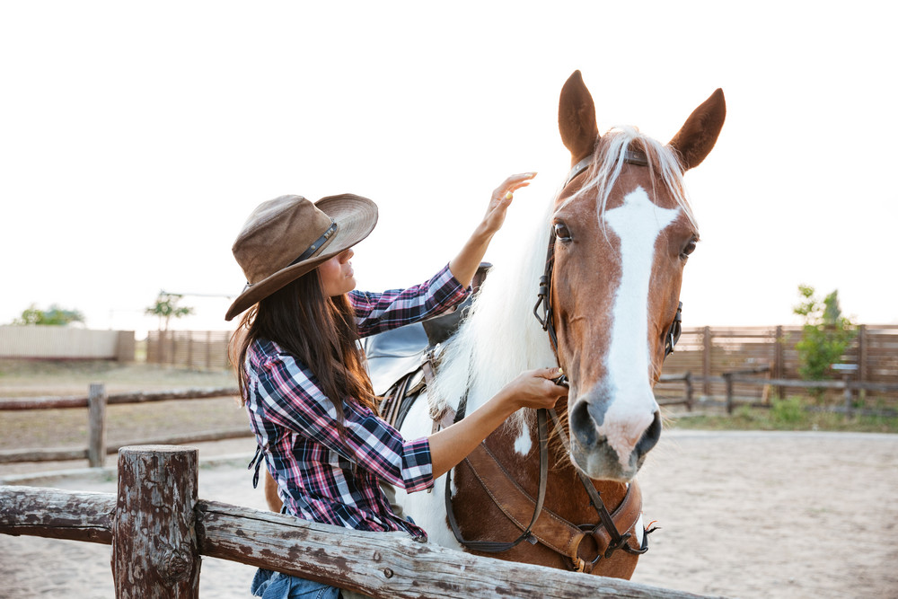 4 Therapeutic Products For Your Horse